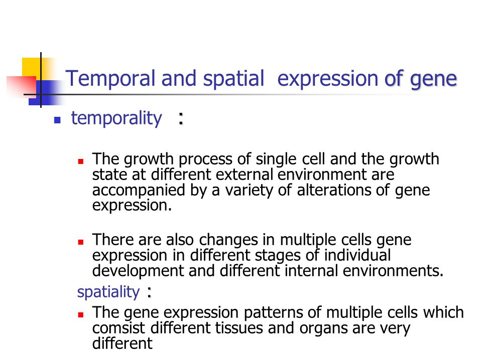 Temporal and spatial expression of gene