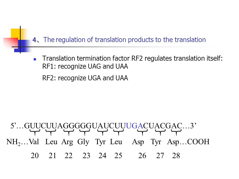 4、The regulation of translation products to the translation