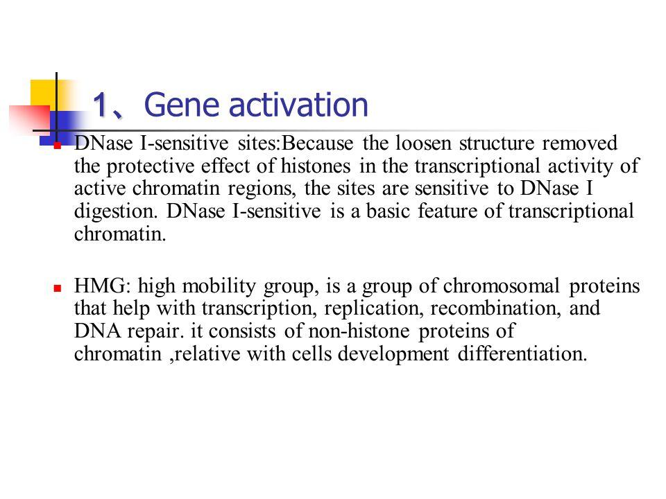 1、Gene activation