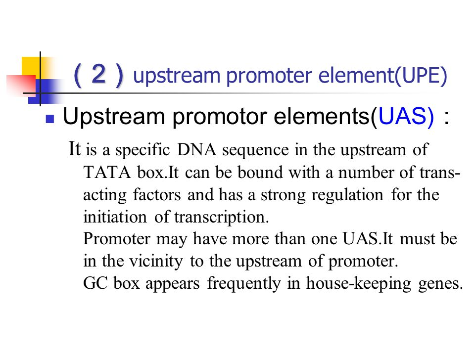 (2)upstream promoter element(UPE)