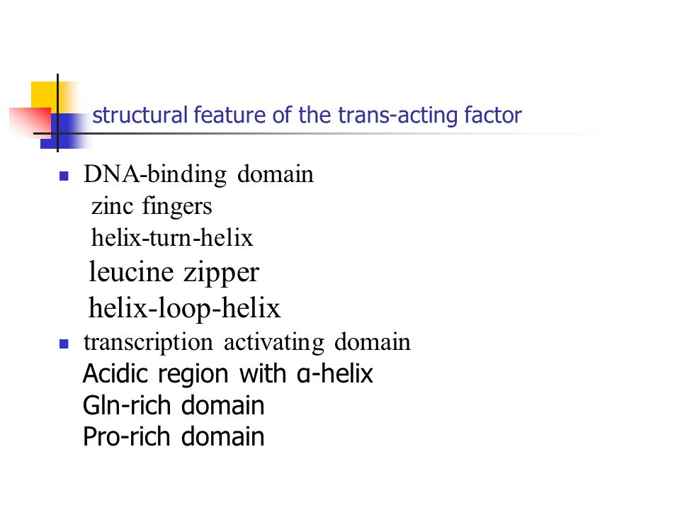 structural feature of the trans-acting factor