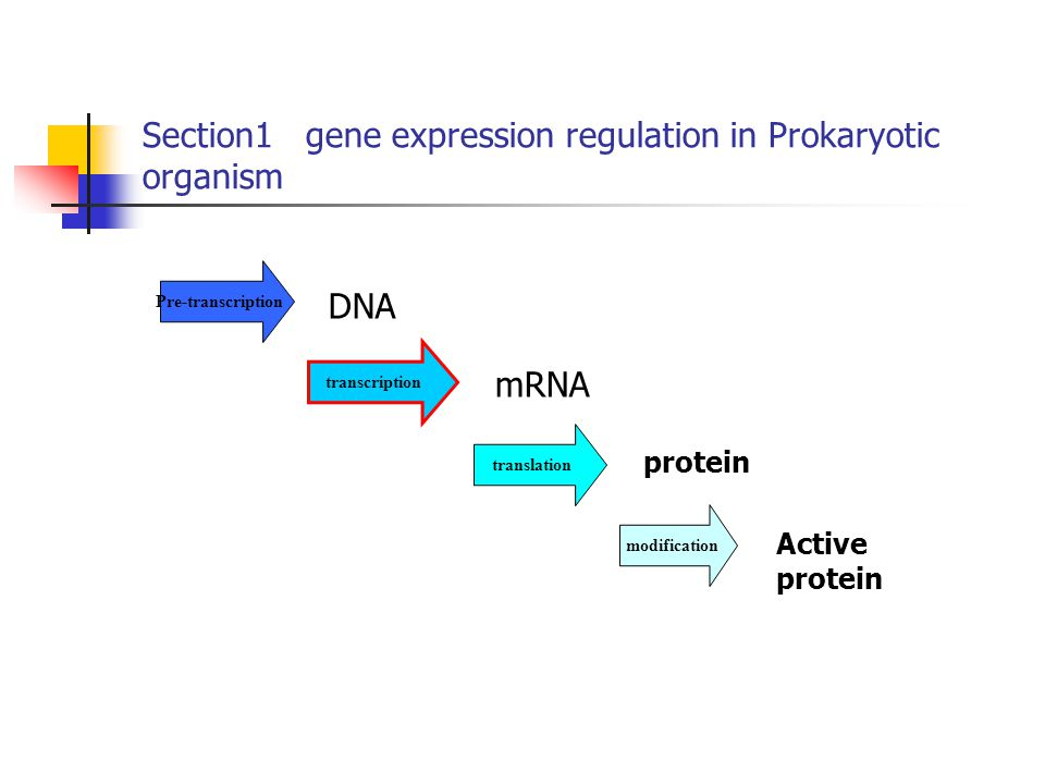 Section1 gene expression regulation in Prokaryotic organism