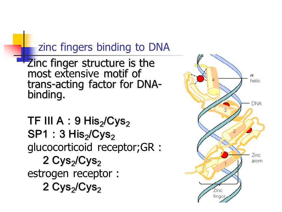 zinc fingers binding to DNA