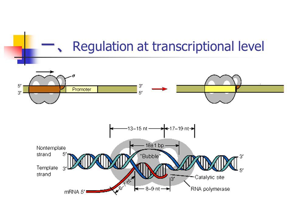 一、Regulation at transcriptional level