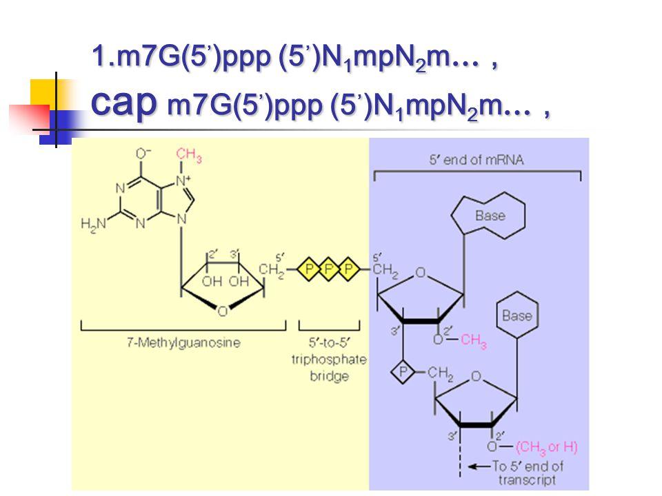 1.m7G(5,)ppp (5,)N1mpN2m…, cap m7G(5,)ppp (5,)N1mpN2m…,