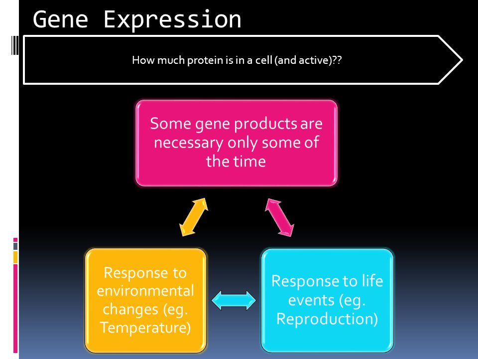Gene Expression How much protein is in a cell (and active)
