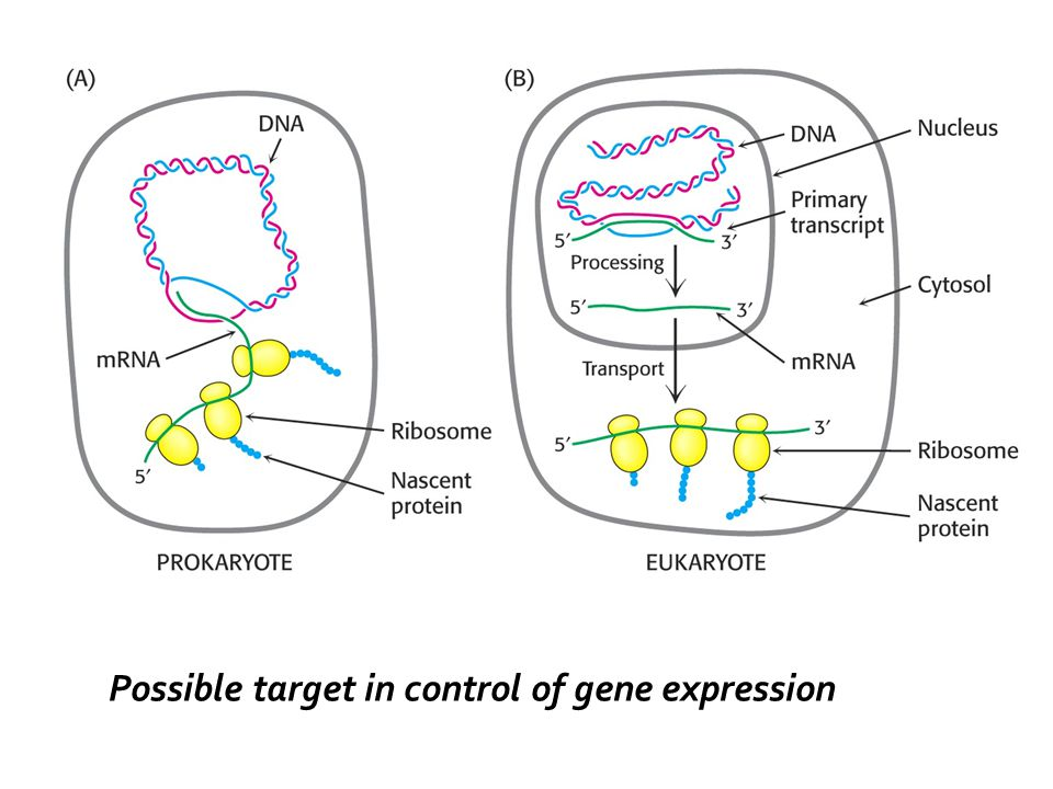 Possible target in control of gene expression
