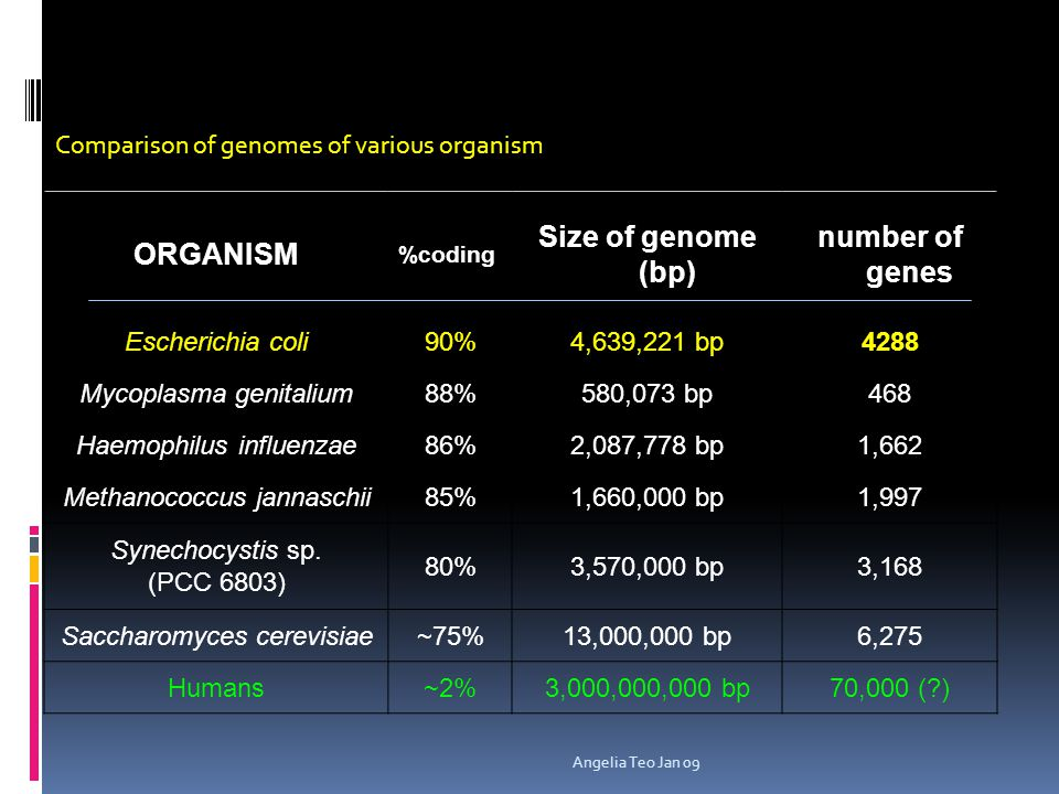ORGANISM Size of genome (bp) number of genes