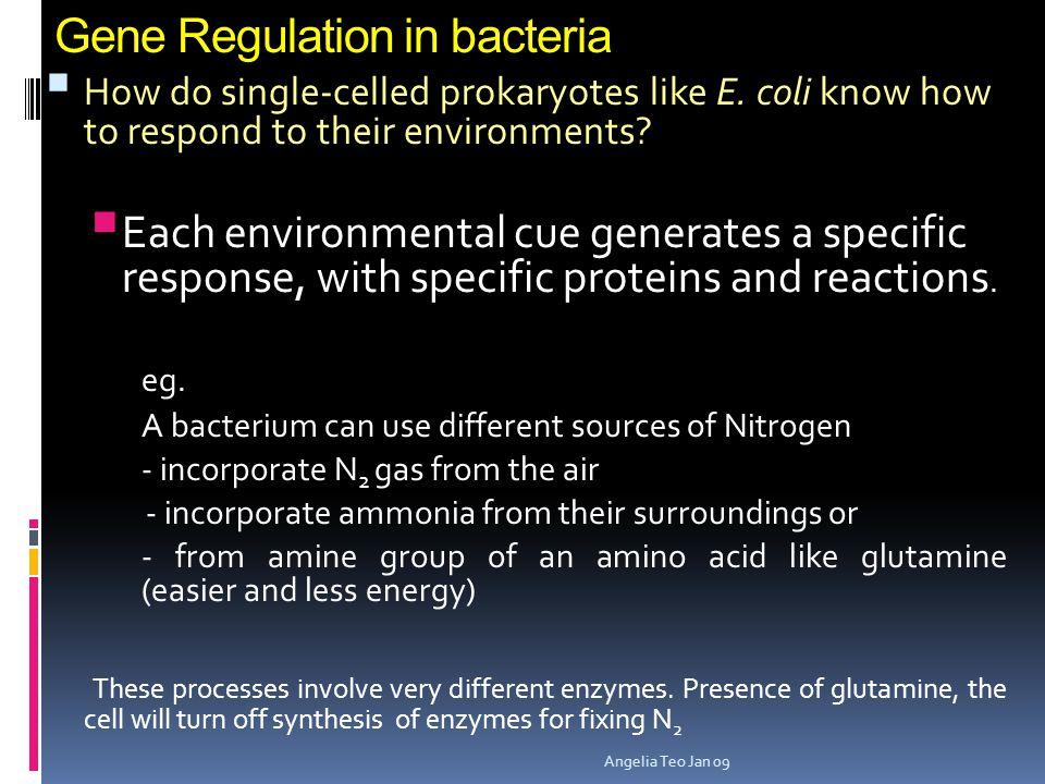 Gene Regulation in bacteria