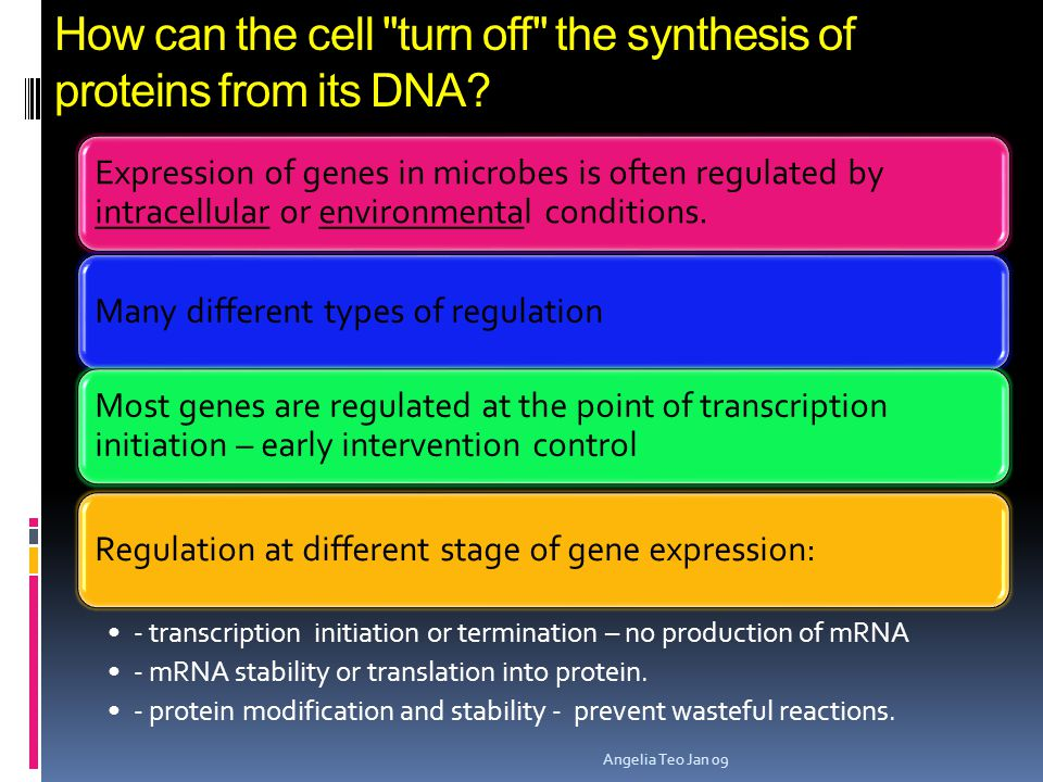 How can the cell turn off the synthesis of proteins from its DNA