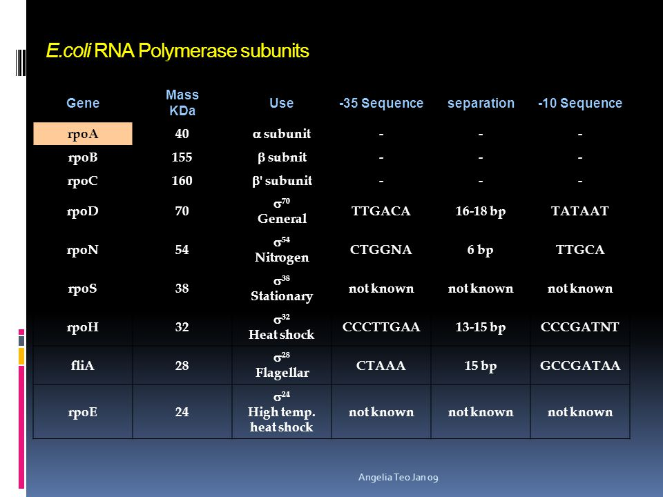 E.coli RNA Polymerase subunits