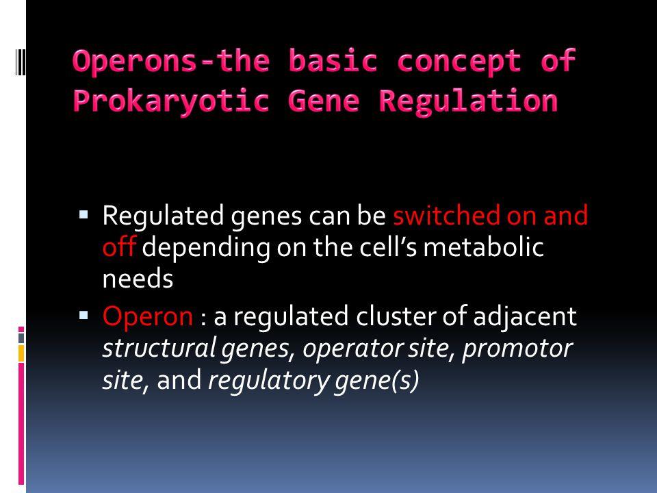 Operons-the basic concept of Prokaryotic Gene Regulation