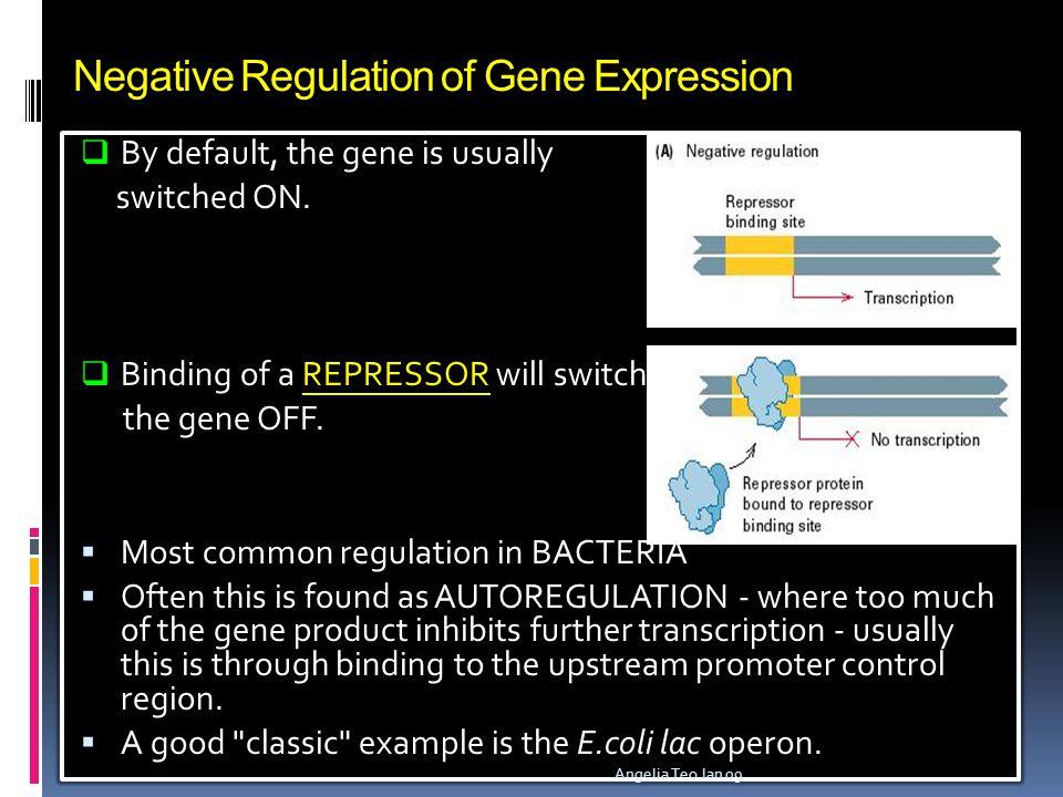 Negative Regulation of Gene Expression