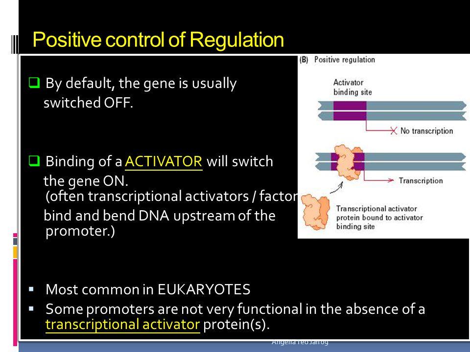 Positive control of Regulation