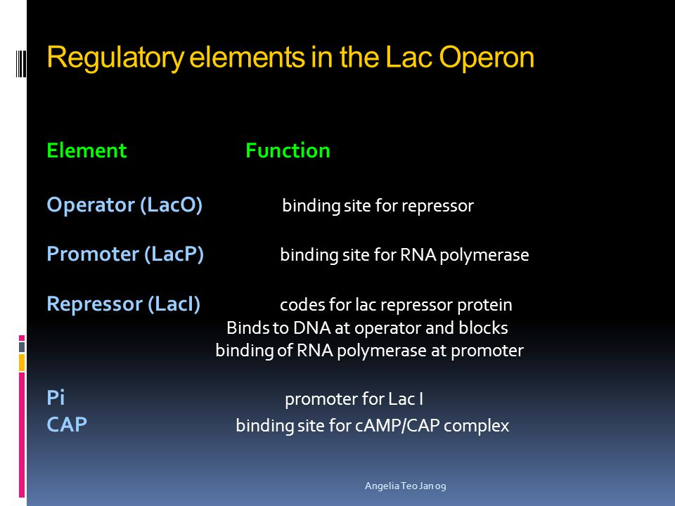 Regulatory elements in the Lac Operon