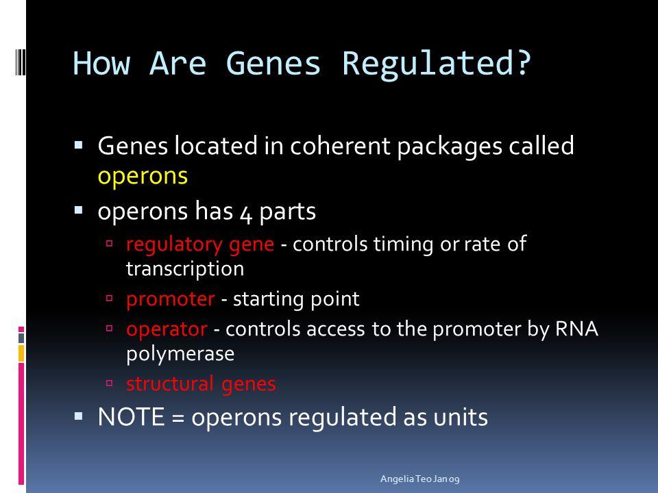 How Are Genes Regulated