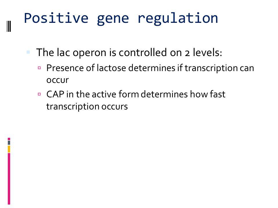 Positive gene regulation