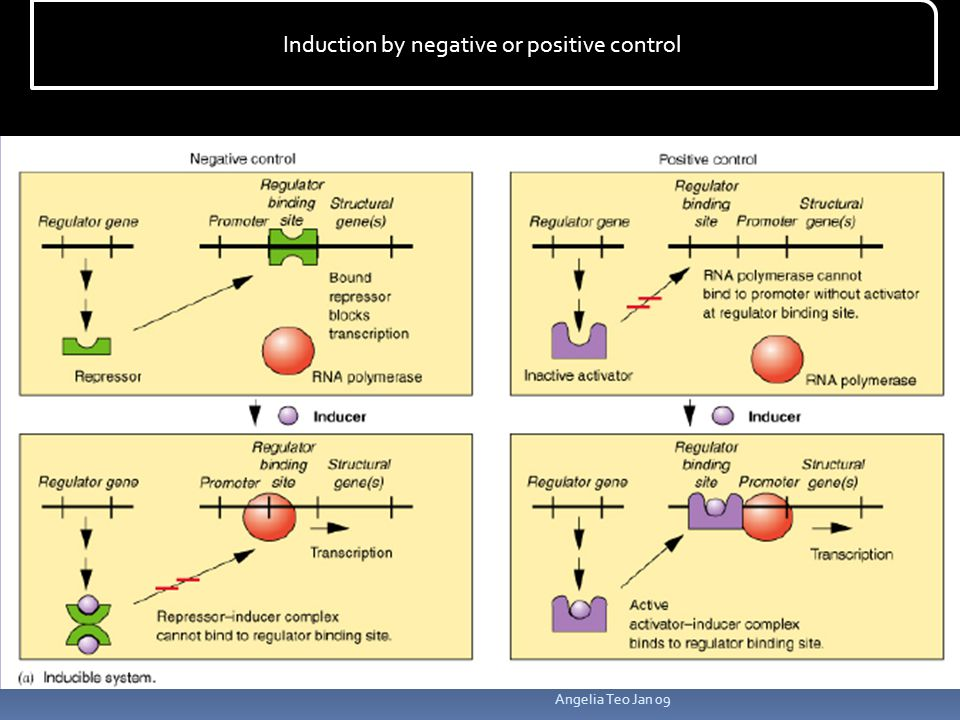 Induction by negative or positive control