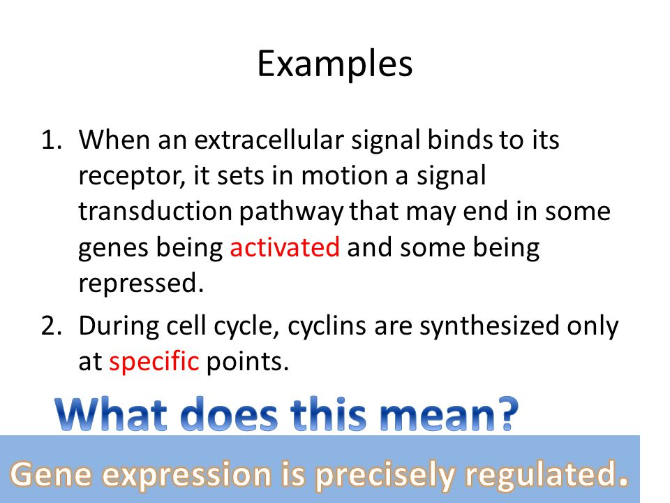 Gene expression is precisely regulated.