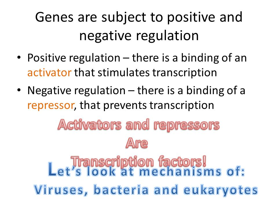 Genes are subject to positive and negative regulation