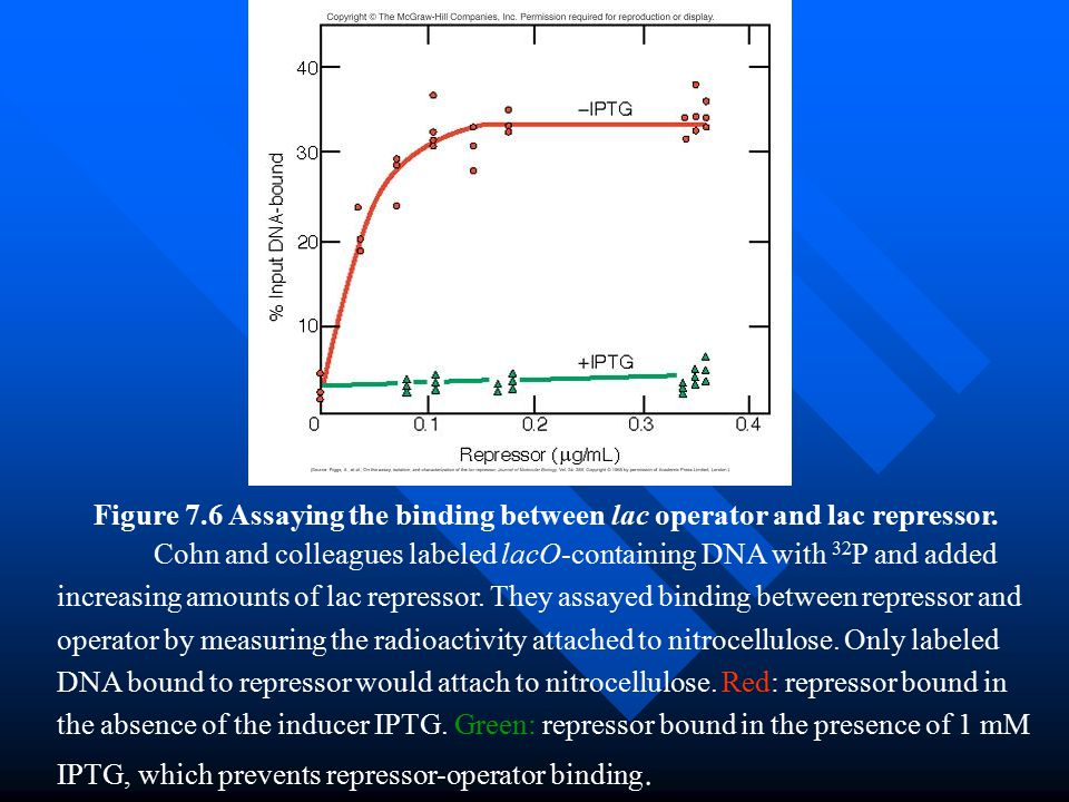 Figure 7.6 Assaying the binding between lac operator and lac repressor.
