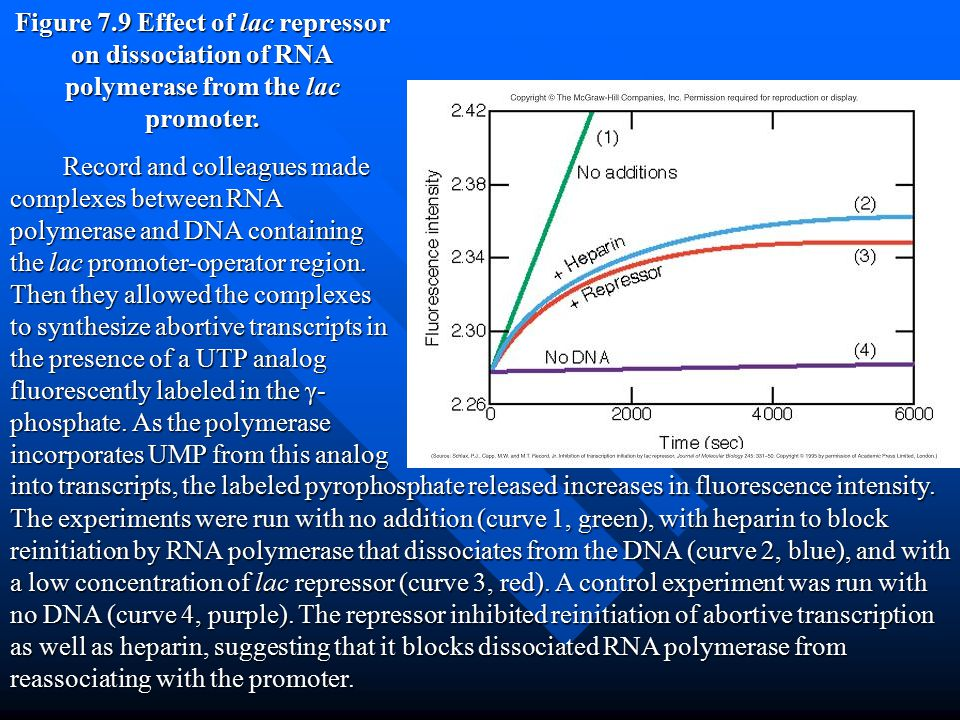 Figure 7.9 Effect of lac repressor on dissociation of RNA polymerase from the lac promoter.