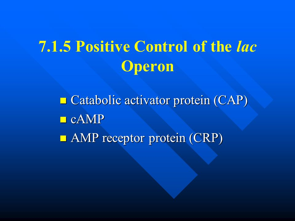 7.1.5 Positive Control of the lac Operon