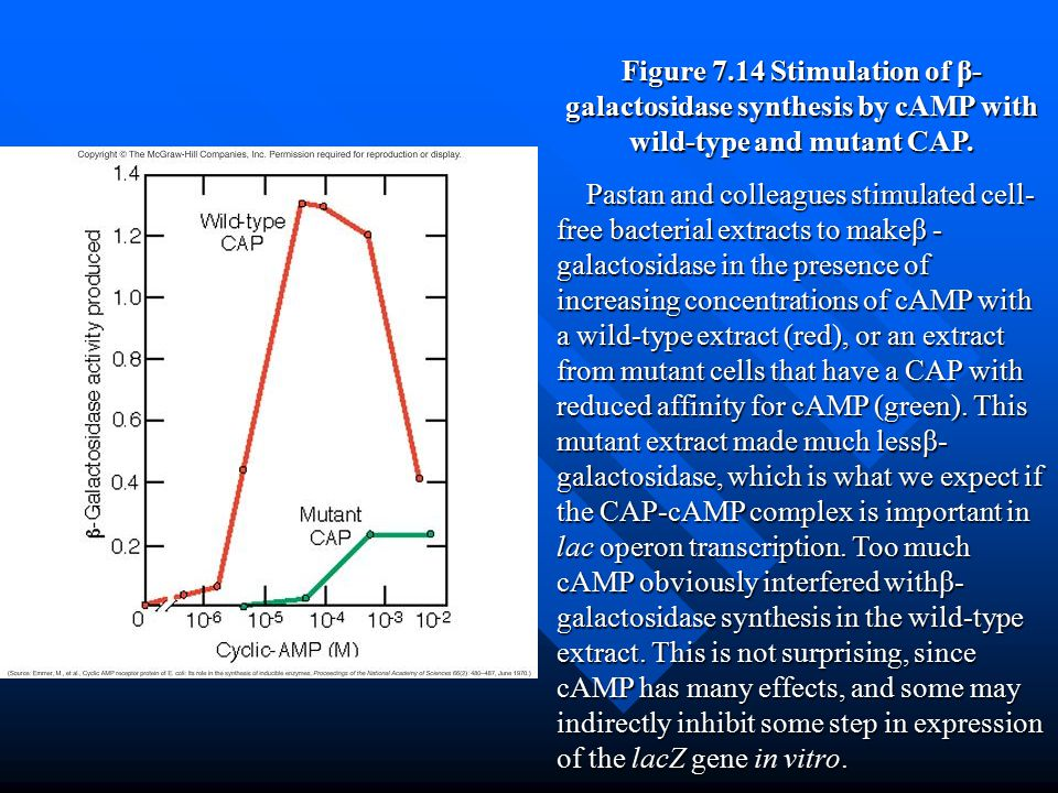 Figure 7.14 Stimulation of β-galactosidase synthesis by cAMP with wild-type and mutant CAP.
