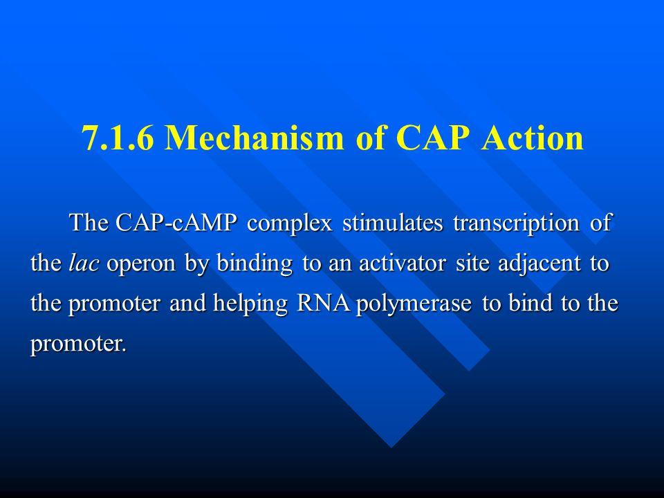 7.1.6 Mechanism of CAP Action