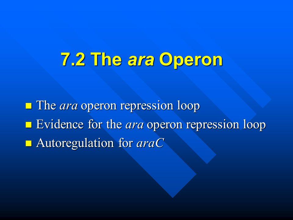 7.2 The ara Operon The ara operon repression loop