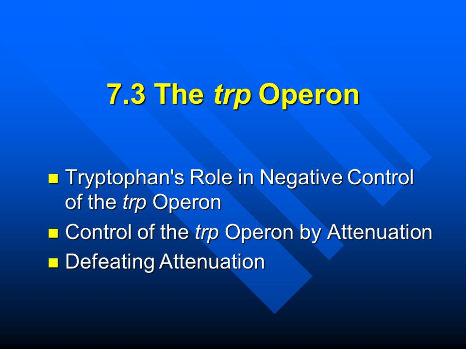 7.3 The trp Operon Tryptophan s Role in Negative Control of the trp Operon. Control of the trp Operon by Attenuation.