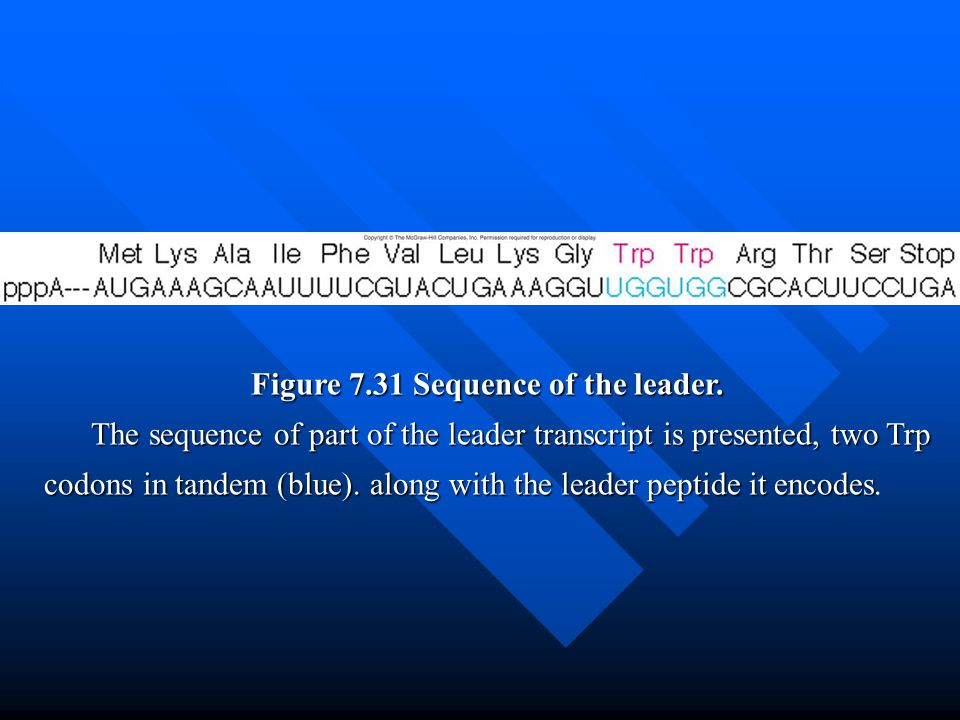 Figure 7.31 Sequence of the leader.