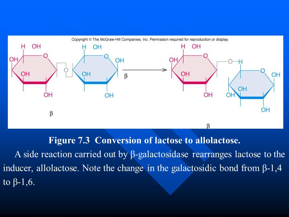 Figure 7.3 Conversion of lactose to allolactose.