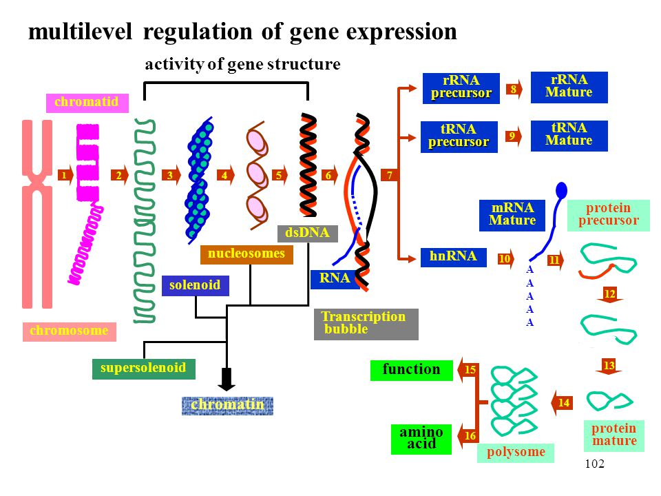 multilevel regulation of gene expression