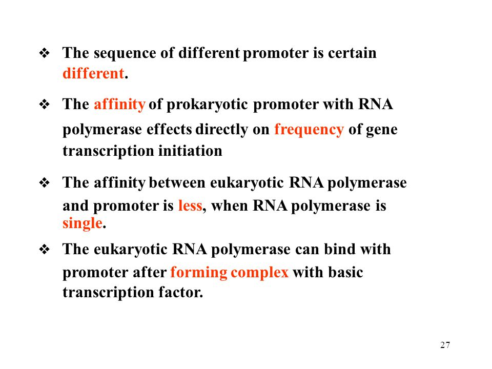 polymerase effects directly on frequency of gene