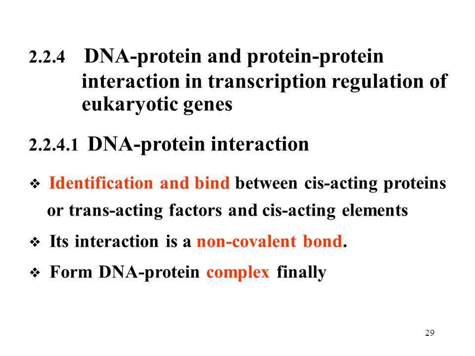 interaction in transcription regulation of eukaryotic genes