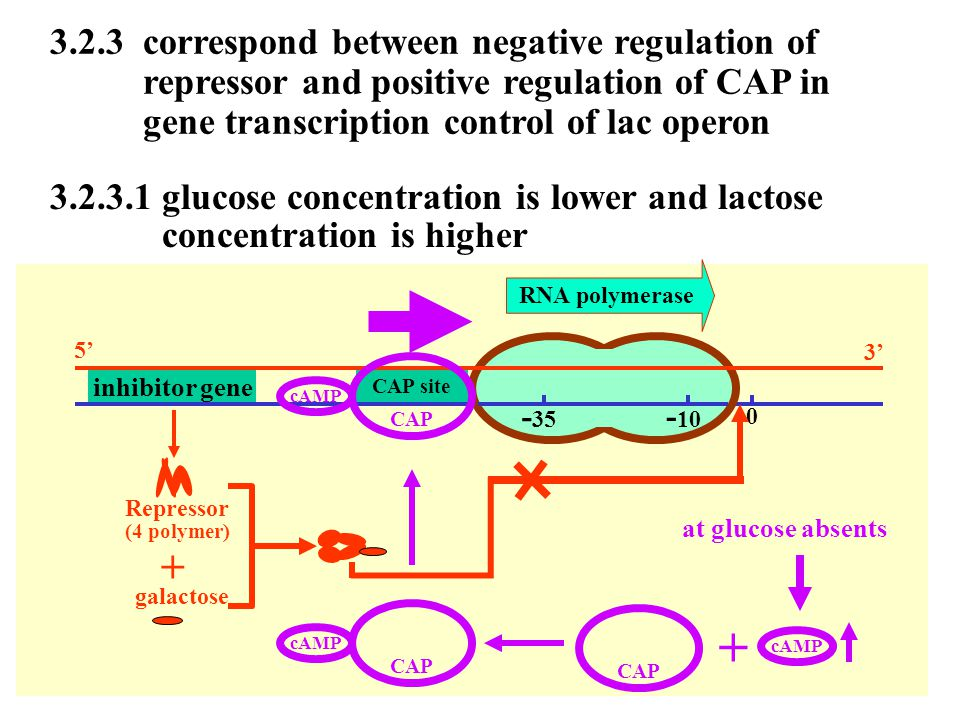 + 3.2.3 correspond between negative regulation of
