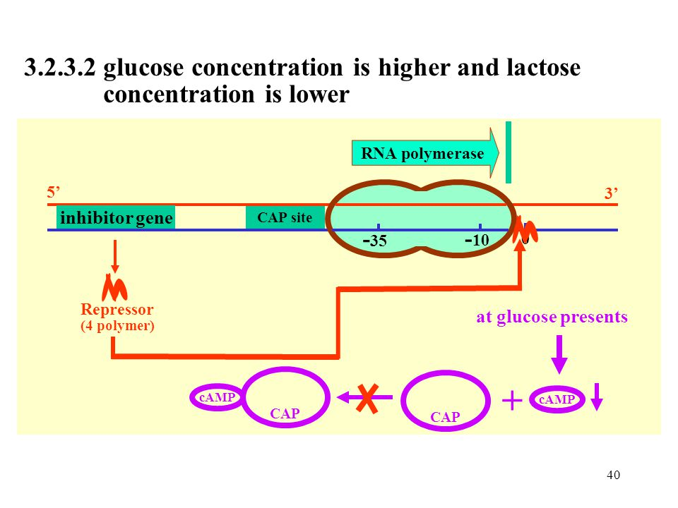 + 3.2.3.2 glucose concentration is higher and lactose
