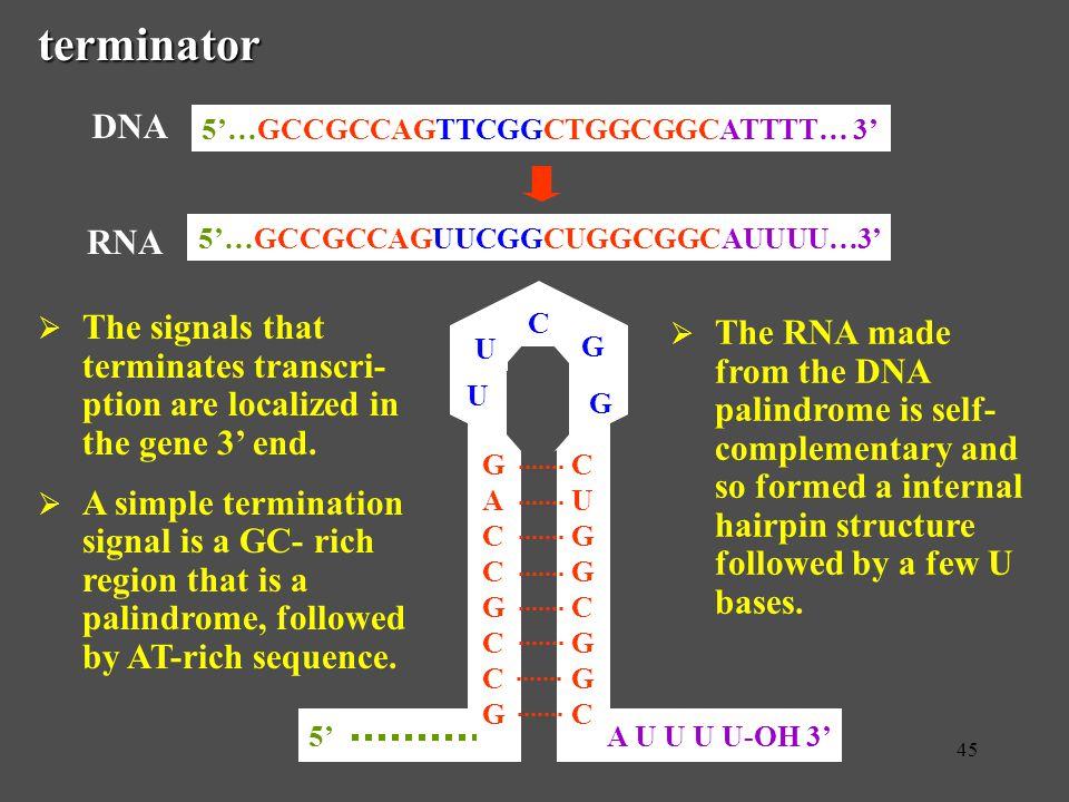 G A C. C. U G. A U U U U-OH 3' 5' U. 5'…GCCGCCAGUUCGGCUGGCGGCAUUUU…3' RNA. 5'…GCCGCCAGTTCGGCTGGCGGCATTTT… 3'
