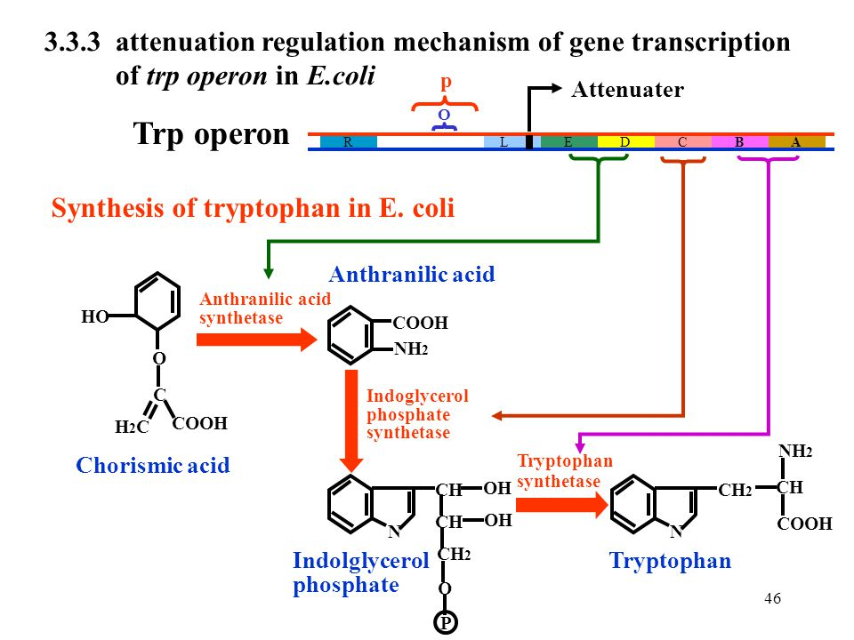 3.3.3 attenuation regulation mechanism of gene transcription