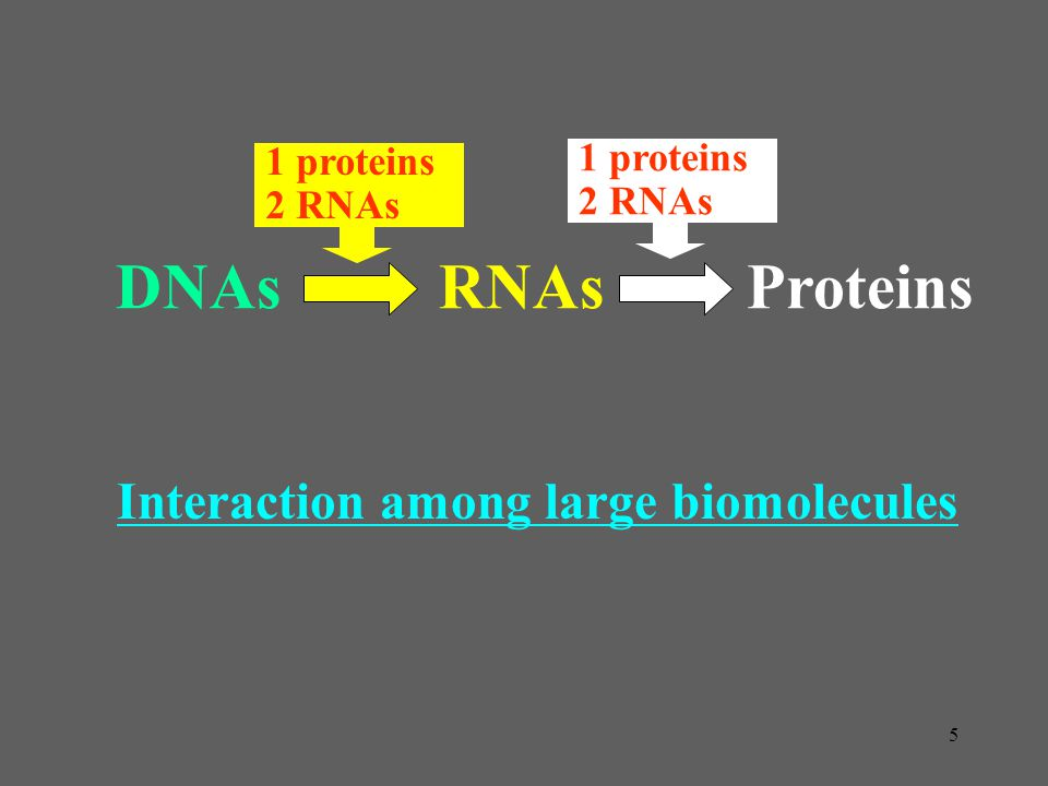 Interaction among large biomolecules