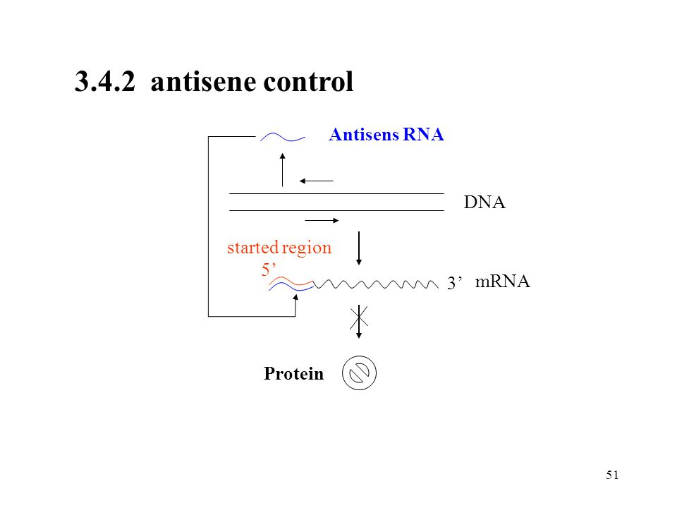 3.4.2 antisene control Antisens RNA DNA started region 5' 3' mRNA