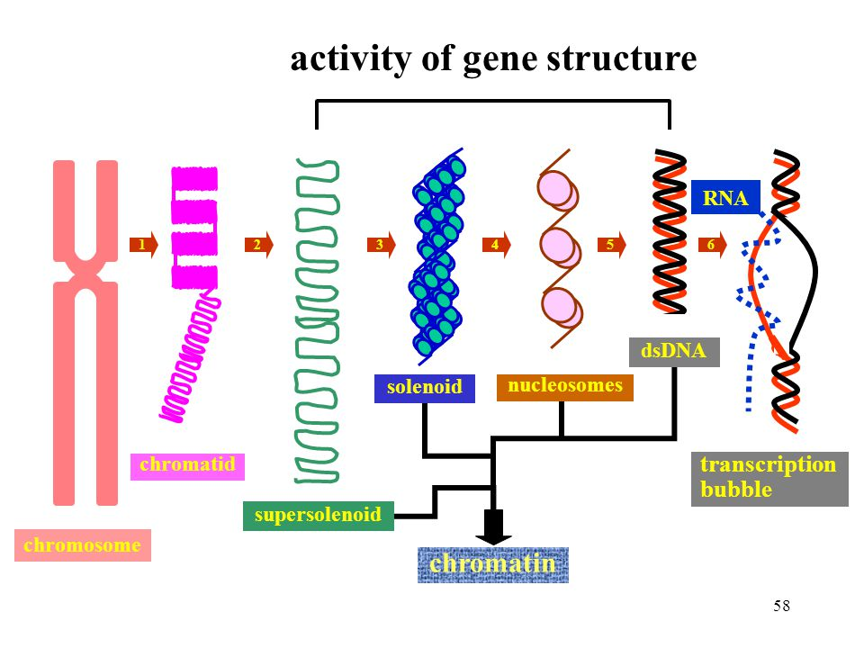 activity of gene structure
