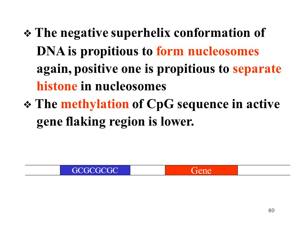 DNA is propitious to form nucleosomes