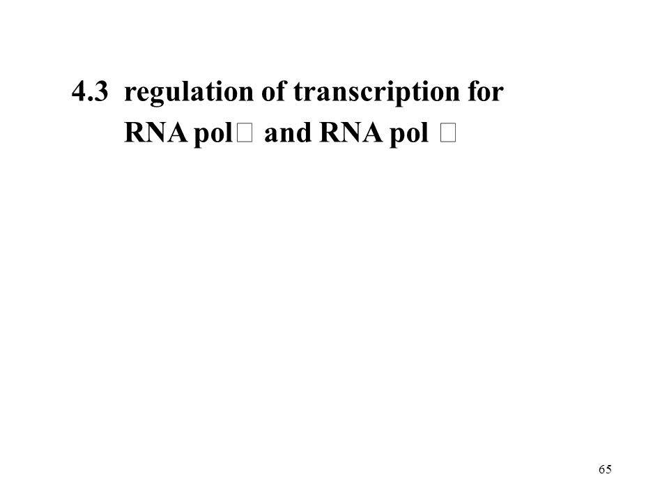 4.3 regulation of transcription for