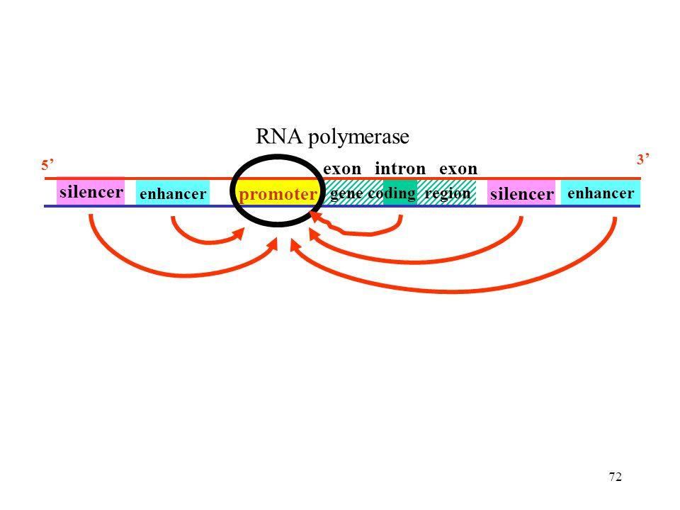 RNA polymerase exon intron exon silencer promoter gene coding region