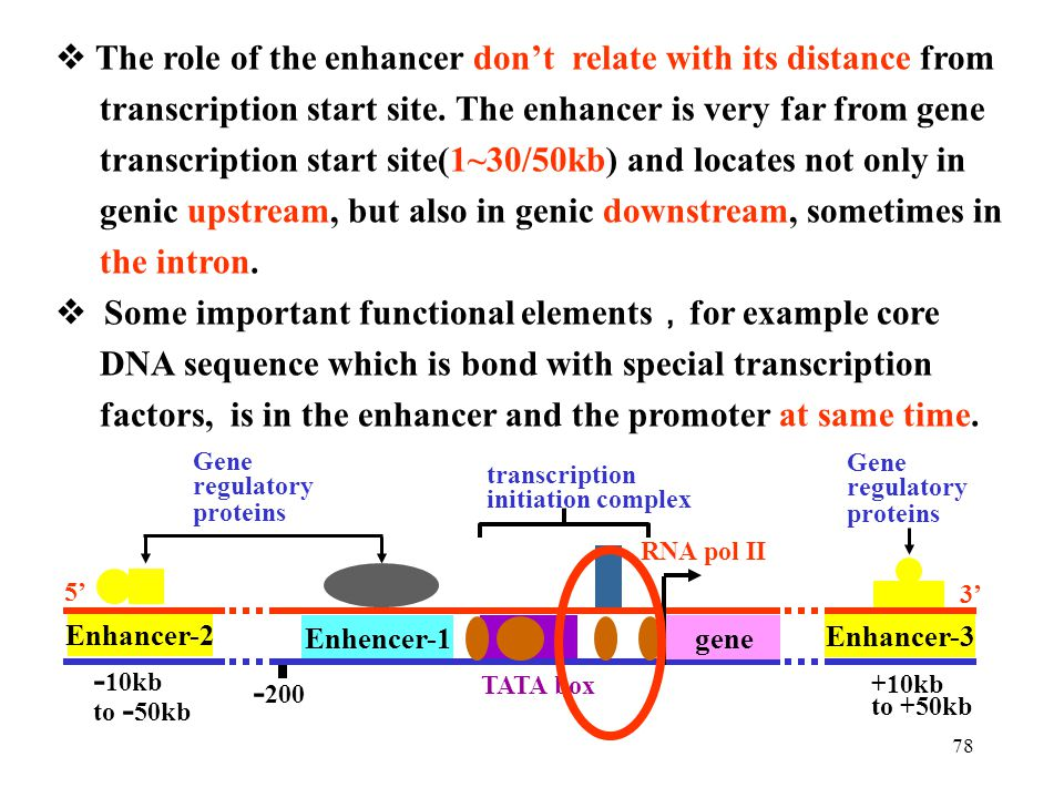  The role of the enhancer don't relate with its distance from