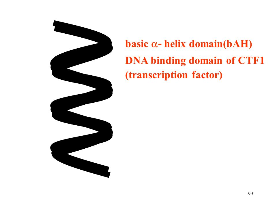 basic - helix domain(bAH)