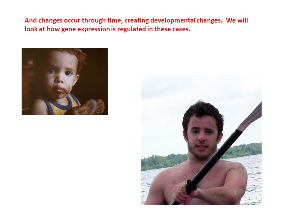 And changes occur through time, creating developmental changes