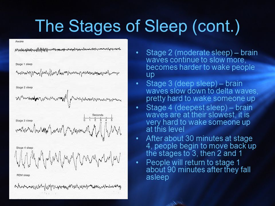 The Stages of Sleep (cont.)